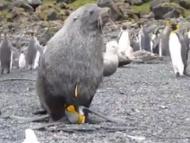 Если тюлени насилуют пингвинов... А Вашингтон навязывает Баку