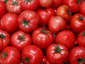 В Россию не пустили 16 тонн помидоров из Азербайджана