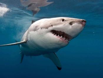 Акула напала на женщину на пляже в Калифорнии