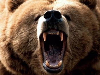 Медведь загрыз 16-летнего марафонца в США
