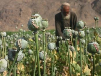 Афганский сценарий для Сирии: арабов сажают на наркотики