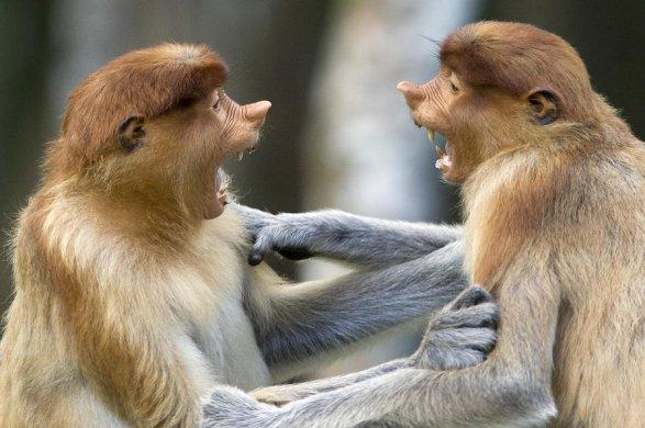 ВХарькове обезьяны отгрызли ухо ипальцы работнику зоопарка