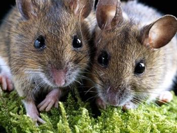 В Астане мыши съели все деньги в банкомате