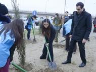 Акция Лейлы Алиевой по посадке деревьев в Баку