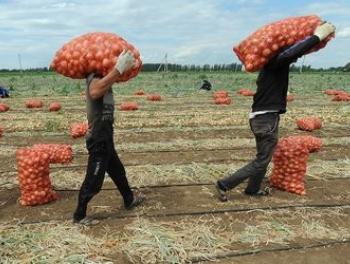 Сотни азербайджанцев хотят уехать в Польшу… чтобы заработать 900 долларов