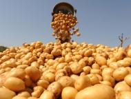 Фермеры разводят руками: Азербайджан завалили картофелем, а покупателей нет