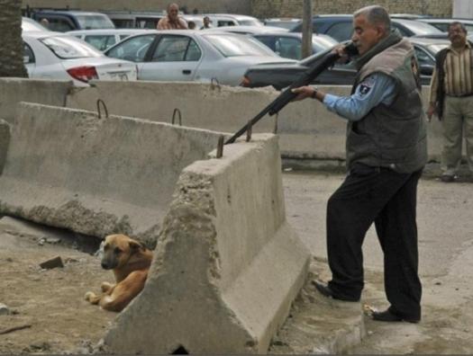 Лейла Алиева остановила отстрел собак: уволены 7 чиновников