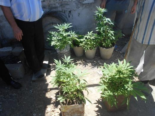 У жительницы Сиязани нашли плантацию марихуаны