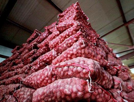 В Азербайджан завезли тонны зараженной картошки