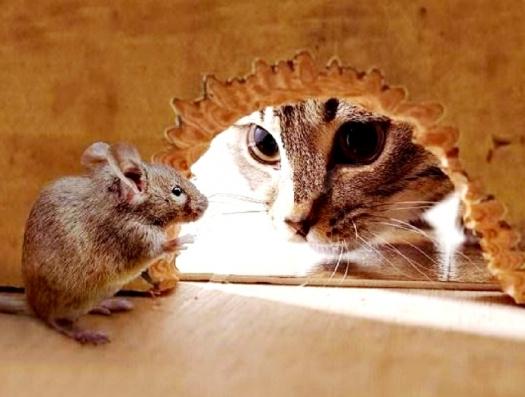Нефтяная игра: кошка дает надежду обреченной мышке
