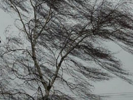 Сильный ветер повалил десятки деревьев в Баку