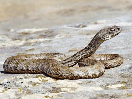 На бакинском бульваре ползают ядовитые змеи?