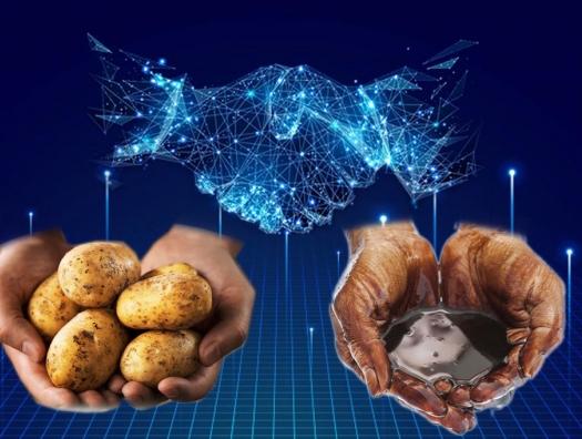 Картофель с рентабельностью нефти