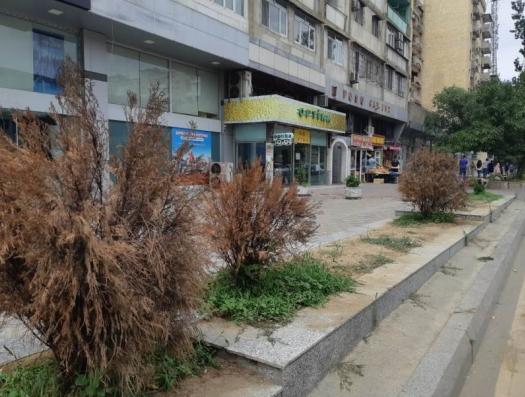 Кто срывает инициативу по озеленению Баку?