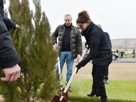 Ильхам и Мехрибан Алиевы посадили деревья в Шемахе