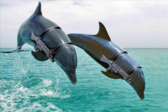 Дельфины, которые служат на войне
