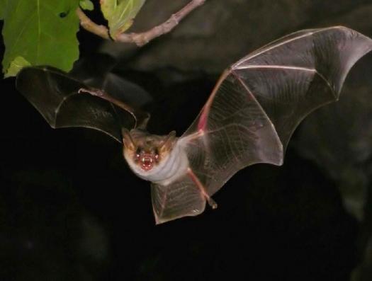 Nature news писал в 2015 году: «Американские ученые и создали болезнь из вируса летучих мышей»