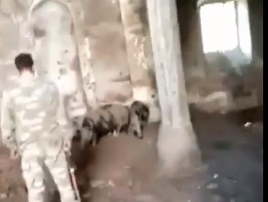 Армяне превратили мечеть в Зангилане в свинарню