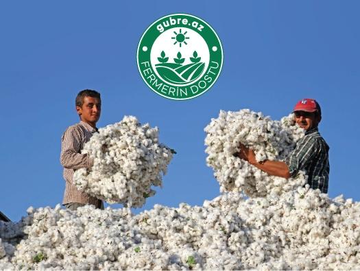 О чем еще можно мечтать фермерам? - Семена за счет государства, удобрения и агрономия от компании