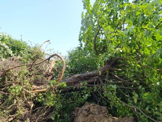 Ленкоранский лес спасён! Минэкологии расторгает договор с компанией Beta