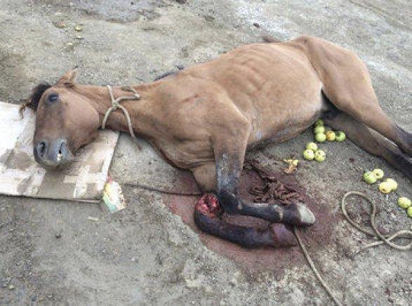 Картинки убитых лошадей